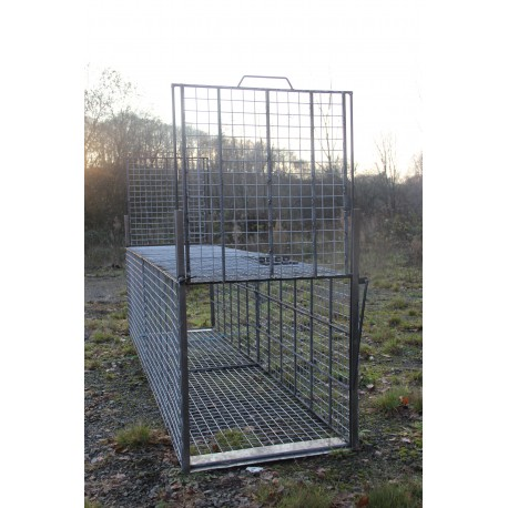 cage capture sangliers